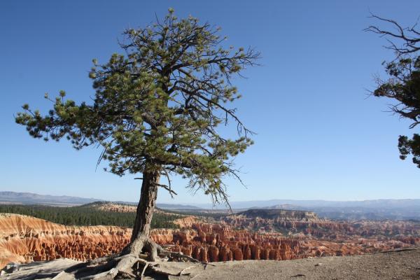 2020-11-etappe-16-bryce-canyon-3BA77189F-CFCF-ACA9-CF36-BE14A47C1D95.jpg